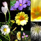 Collage of Spring plants-Dec 2008! by naturelover