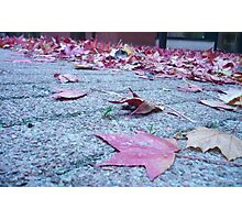 Leafy Layer Photographic Print