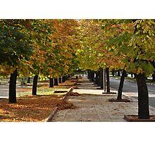 Along autumn  trees Photographic Print