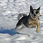 Snow Leaper by Fotography by Felisa ~