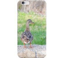 Female Mallard Duck iPhone Case/Skin