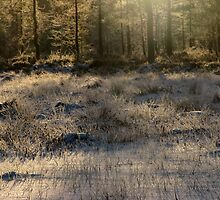 'Almost last light of the year III' by Petri Volanen