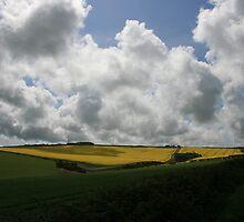 Yellow field by motorista