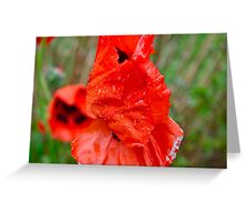 Wet Poppy 2 Greeting Card