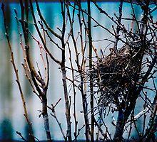 Abandoned Nest by Jonicool