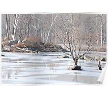 Beaver Pond in Winter Poster