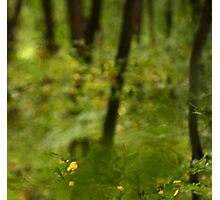 Visionary Forest Photographic Print