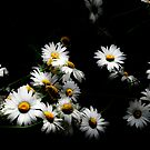 Marguerite by Isard