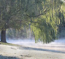 Early Morning Mist by noffi