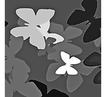 Black white flutterbies Photographic Print
