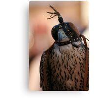 Beautiful Falcon Canvas Print