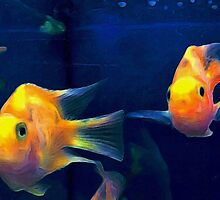 Parrot Cichlid Pair by wolfshark2015