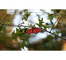 Mariposa Migration Photographic Print