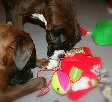 Is this all we get this Christmas???  -Boxer Dogs Series- by Evita