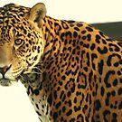 Female Leopard by Franco De Luca Calce