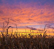Cornfield and Sunset Sky by Kenneth Keifer