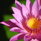 Lotus flower by BlairC