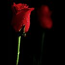 Valentine by Kim Roper