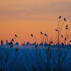 Dawn patrol by Sue Morgan