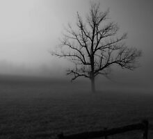 The Fog Is Lifting in Black & White by ladywings