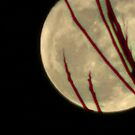 Moon Rise 009 by dge357