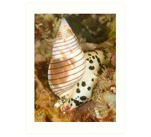 Sea Snail Art Print