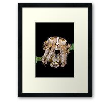 Not so incy wincy spider Framed Print