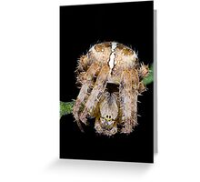 Not so incy wincy spider Greeting Card