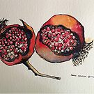 Pomegranate. Pen and wash 2012 by Elizabeth Moore Golding