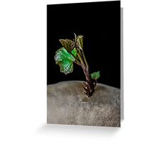 GIANT TREE THREATENS PLANET ZORG, Read all about it!  Greeting Card