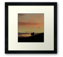 Not quite square sheep Framed Print