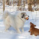 Goliath Share the Ball PLEASE! Sadie Pleads by goldnzrule