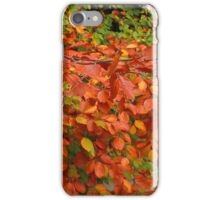Echoes of Autumn iPhone Case/Skin