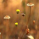 yellow by David Rozario