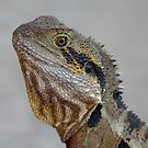 Eastern Water Dragon  by Jenny Brice