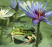 Frog and water-lilies by jimmy hoffman