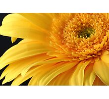 Flower's Sunshine Photographic Print