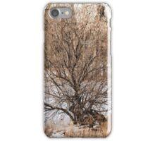 Cherry Creek Winter Study 4  iPhone Case/Skin