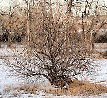 Cherry Creek Winter Study 4  by Robert Meyers-Lussier