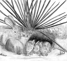 wild rabbits - charcoal by Gordon Pegler
