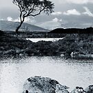 Lone Tree Rannoch Moor  by JulieP