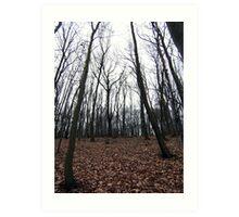 winter trees. bratislava, slovakia Art Print