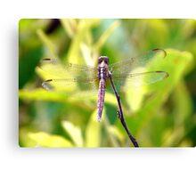 Dragonfly from Brazilian Savannah Canvas Print