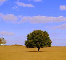 A Lone Beauty  by Shelby  Stalnaker Bortone