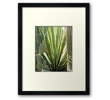 Cactus Patch Framed Print