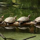 In A Row by H & B Wildlife  Nature Photography