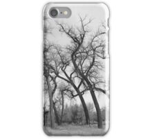 Winter Dance of the Tall Trees  iPhone Case/Skin