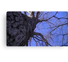 Windy Day - The Blue & The Green 008 Canvas Print