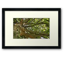 Windy Day - The Blue & The Green 011 Framed Print