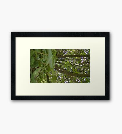 Windy Day - The Blue & The Green 013 Framed Print